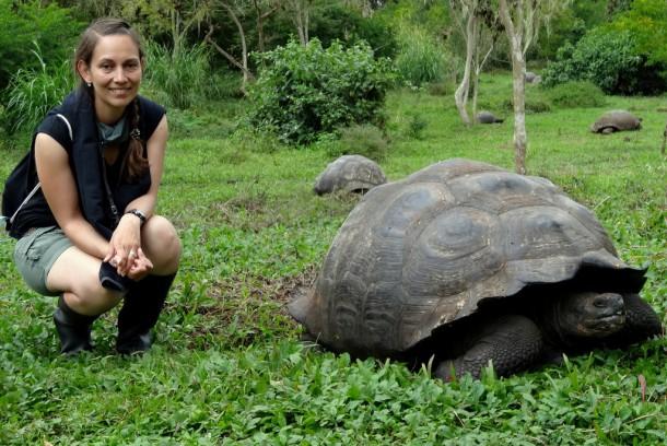 Galapagos - Giant Tortoise at Rancho Manzanillo, SantaCruz Island
