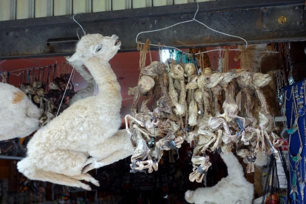 Bolivia - La Paz - Witches' Market, Lama fetuses