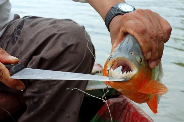 Bolivia - Serere Reserve - Juan Carlos piranha fishing