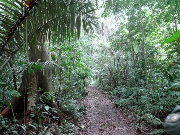 Bolivia - Serere Reserve - trail