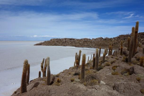 Bolivia - Uyuni - Salar de Uyuni Tour, Isla Incahuasi