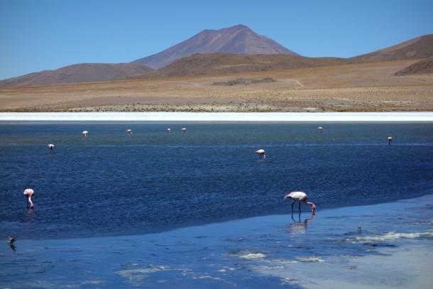 Bolivia - Uyuni - Salar de Uyuni Tour, Flamingos at Laguna Honda
