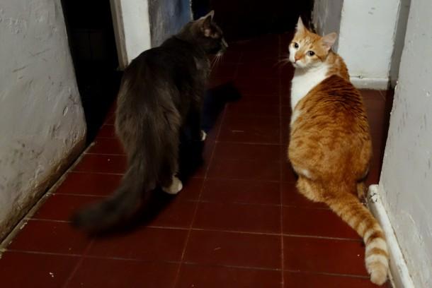 Argentina - Mendoza, host cats