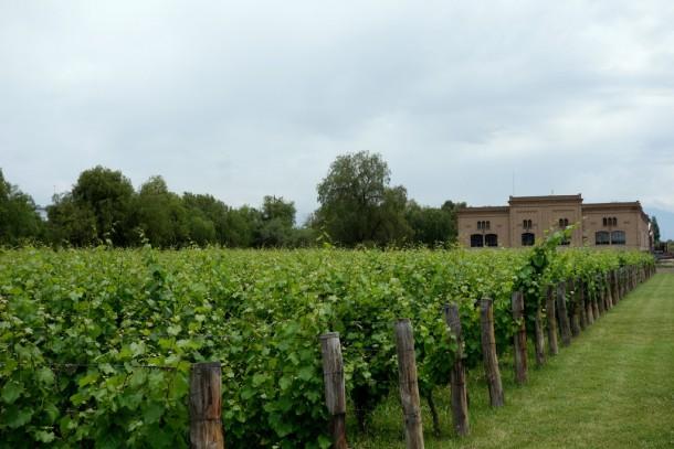 Argentina - Maipu, Argentina's biggest winery: Trapiche