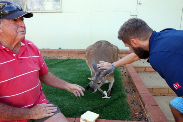 Australia - Geraldton, Drummond Cove CP, Kangaroo Joey